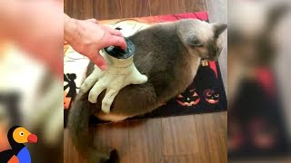 Cat Is Having A Very Addams Family Moment | The Dodo
