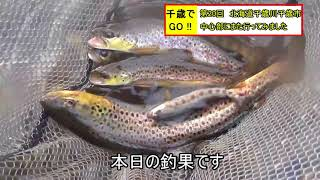 千歳でGO!! 第20回 北海道千歳川千歳市中心部にまた行きました。おまけに謎の巨大魚とのファイト動画つけました。