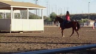 Blue Ribbon horse show