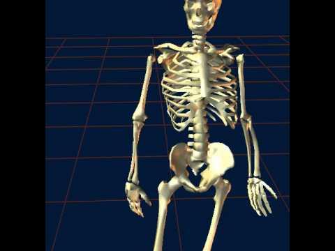 supinación y pronación - YouTube