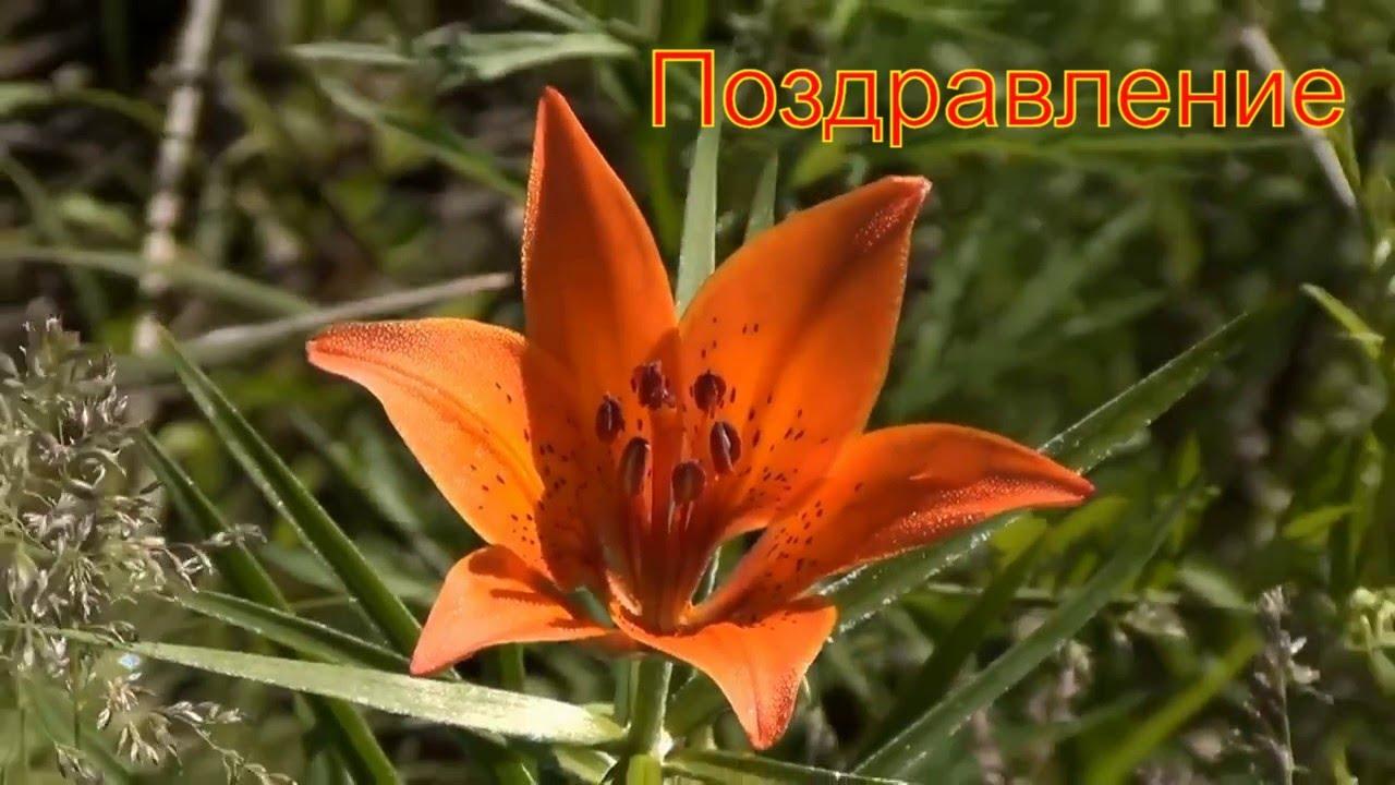 Выгоднее всего купить саженцы парковых роз с доставкой в любую точку россии можно в интернет-магазине «долина роз».