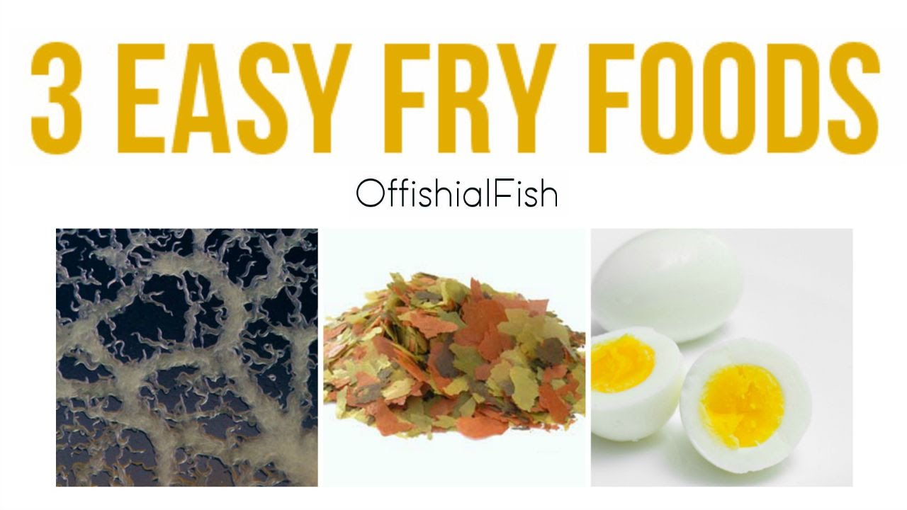 3 easy fry baby fish foods youtube for Baby koi food