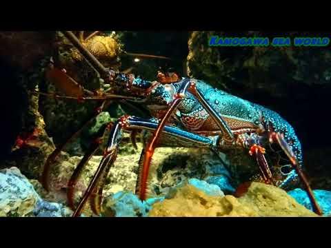 Mister aquarium 4