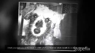 Everett Animal Control Abusing My Dogs...