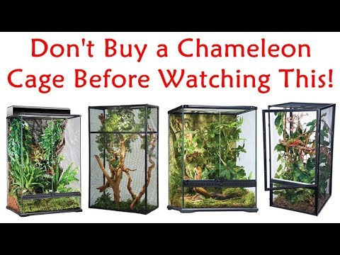 Buy Chameleon Cage - Don't Buy A Chameleon Cage Before Watching This!