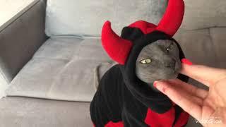 Одежда для сфинксов купить Харьков, одежда для кота купить, sphynx cat wear, cat clothes, 2019 г.