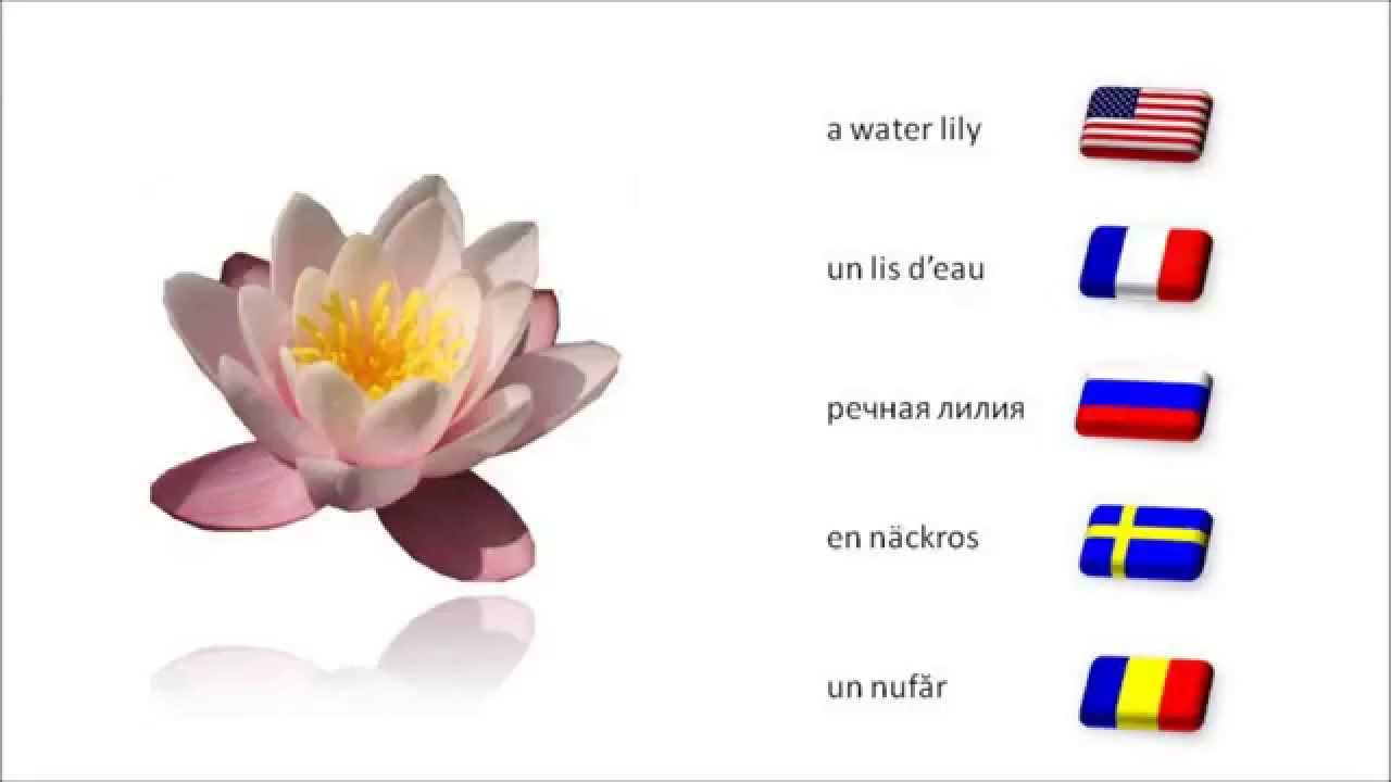 23 flower names english french russian swedish romanian youtube mightylinksfo