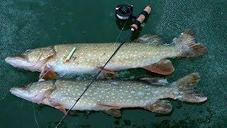 ЩУКИ ЖАДНО АТАКУЮТ БАЛАНСИР Вечерний выход щуки Зимняя рыбалка