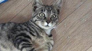 쓰레기봉투에 버려진 아기고양이 두마리... 구조 4일째