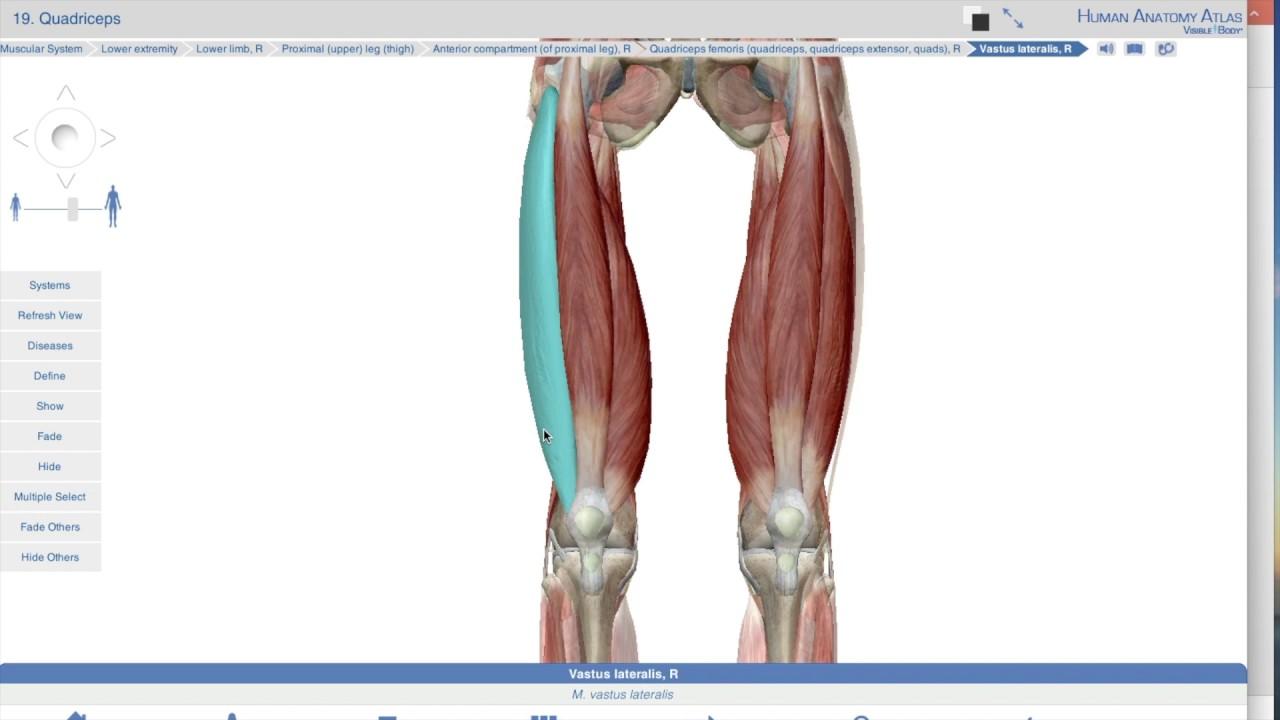 Colorful Proximal Definition Anatomy Illustration - Anatomy and ...