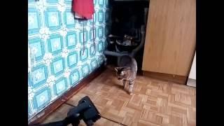 кошка против пылесоса