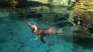 Shedd Aquarium 090918