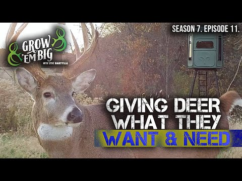 Understand Whitetail Behavior for Better Deer Hunting