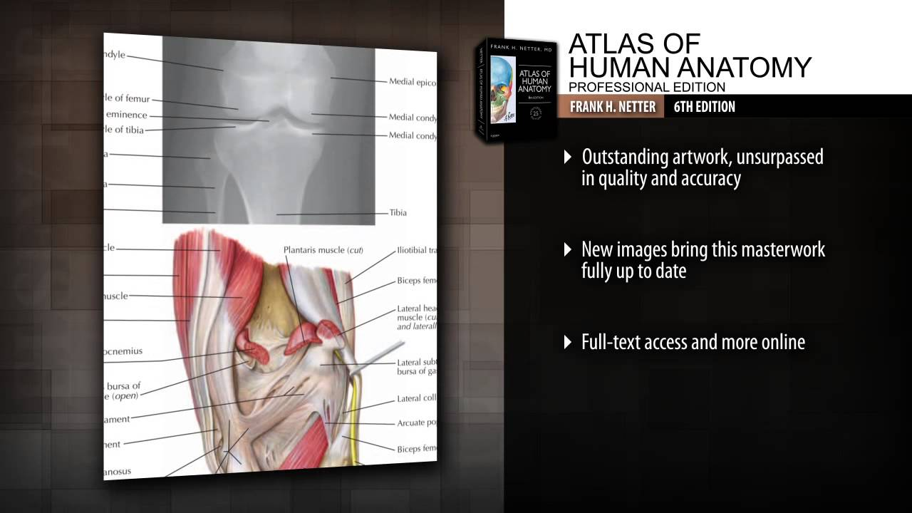 Atlas Of Human Anatomy Professional Edition 6th Edition Youtube