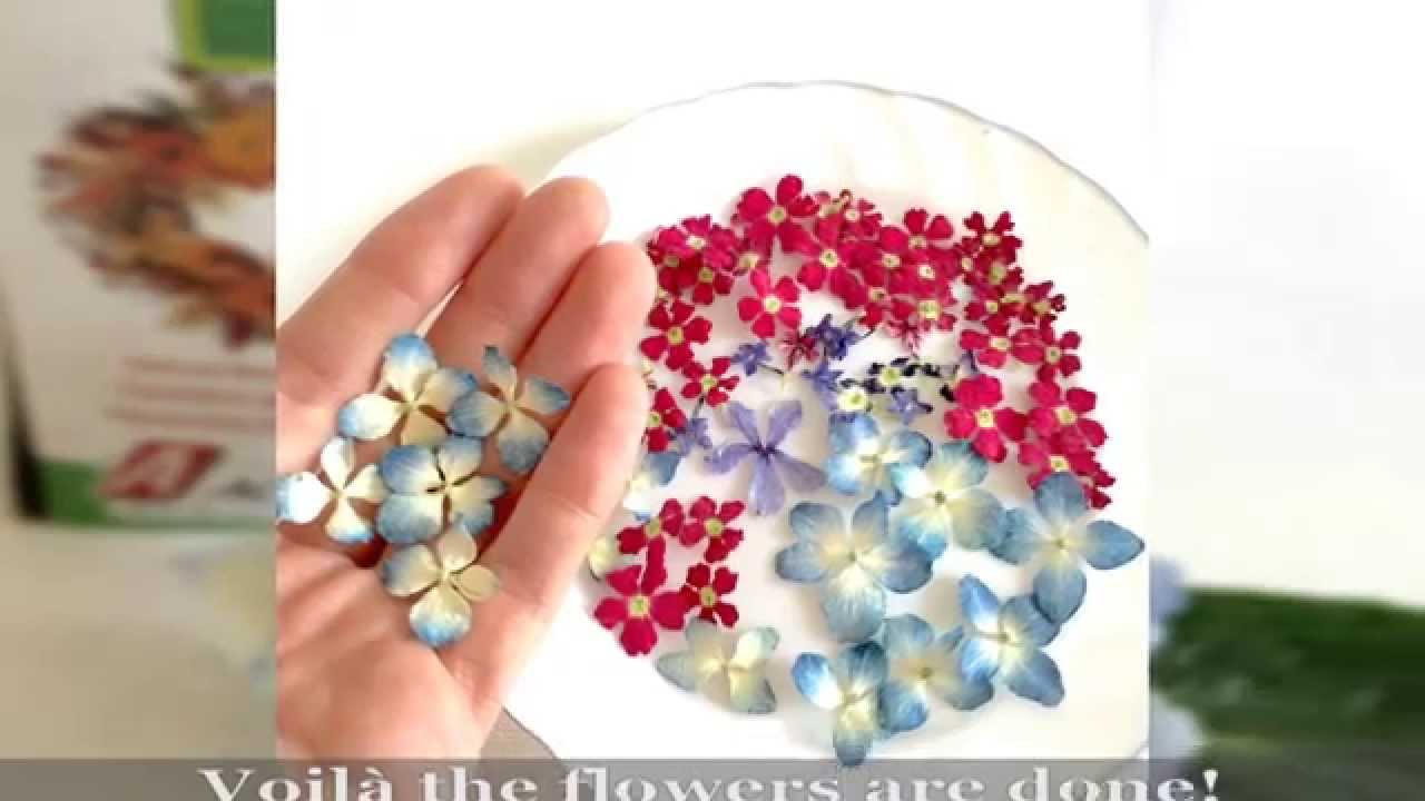 How to dry flowers with Silica Gel! ALAMOULD