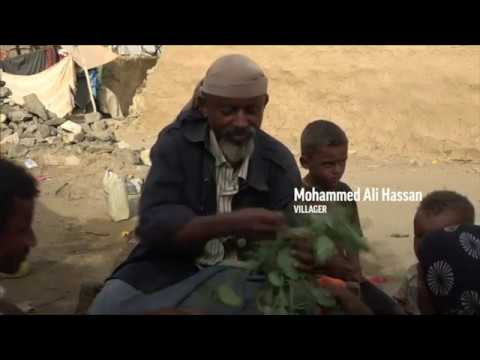 Starving Yemenis forced to eat leaves for survival