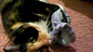 видео kitten underwear