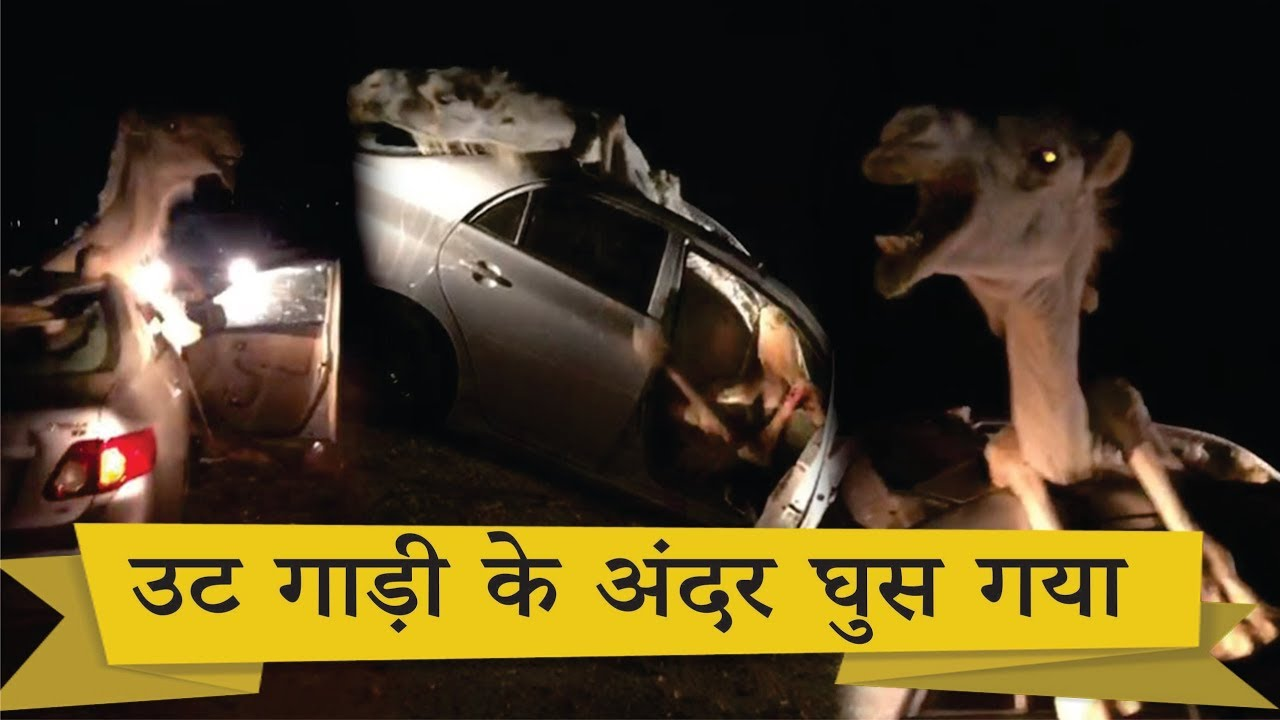camel accident with car | jodhpur | rajasthan - youtube