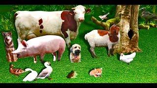 говорят  животные 3 / (голоса животных) / Talking animals cartoon