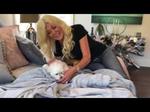International Puppy Day Maria Montazami
