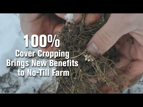 100% Cover Cropping Brings New Benefits to No-Till Farm