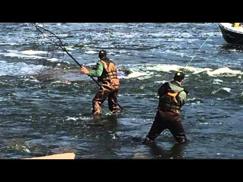 Oswego river salmon fishing sept 20 2015 youtube for Oswego river fishing report