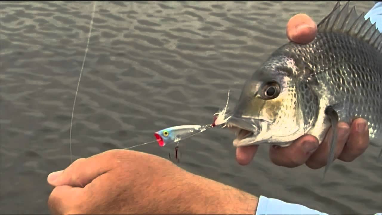 Info On Fishing Estuaries with Lures DVD Preview