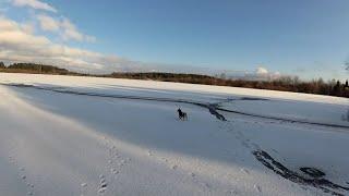 Прогулка до озера без рыбалки с собакой