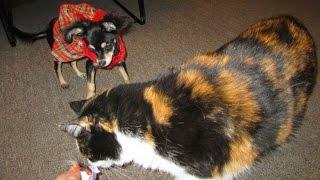 Кошка и щенок. Друзья или соперники? =)