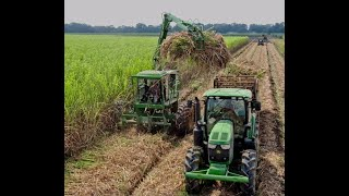 Loading and Cutting Seed Sugarcane in Louisiana.