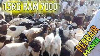 Above 15kg Ram 7000 | Ram prices in Pebbair Market on 17-11-2018