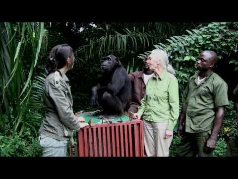 L'incroyable geste de Wounda à Jane Goodall