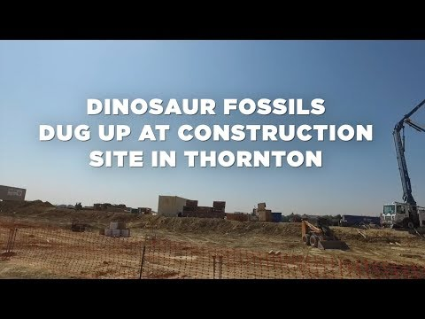 Triceratops skull, skeleton dug up at construction site in Thornton, Colorado