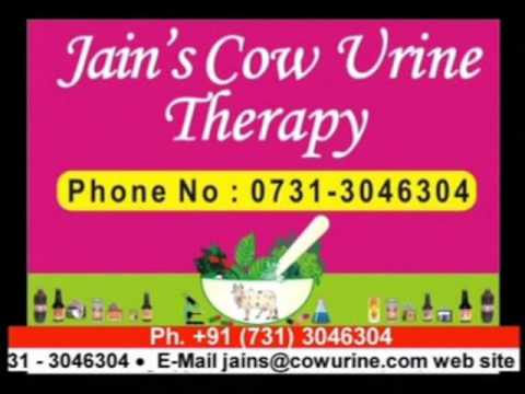 Jain's cow urine therapy part-I Call us on +91 731 4739100 or visit