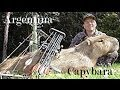 Capybara Bow Kill worlds largest rodent Argentina South America