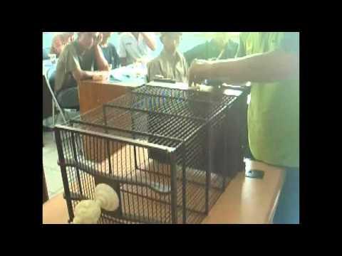 Pelatihan Pembuatan Sangkar Burung oleh Karunia Sangkar di Kelurahan Patangpuluhan Jogja