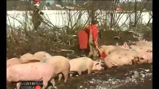 «КТ» Критическое видео. Проишествия с животными