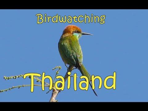 Birdwatching Northern Thailand