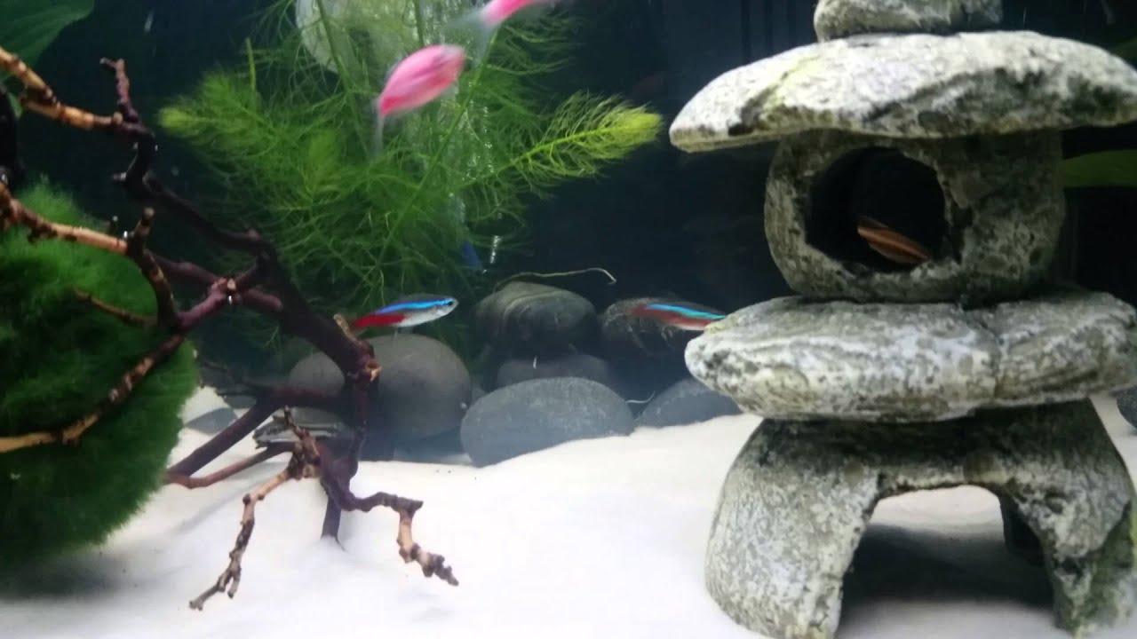 10 gallon community sand aquarium youtube for Aquarium vpc