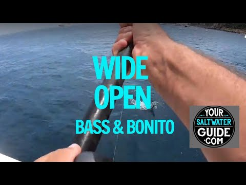 Catalina Island Fishing Report 2019 – Wide Open Bass And Bonito