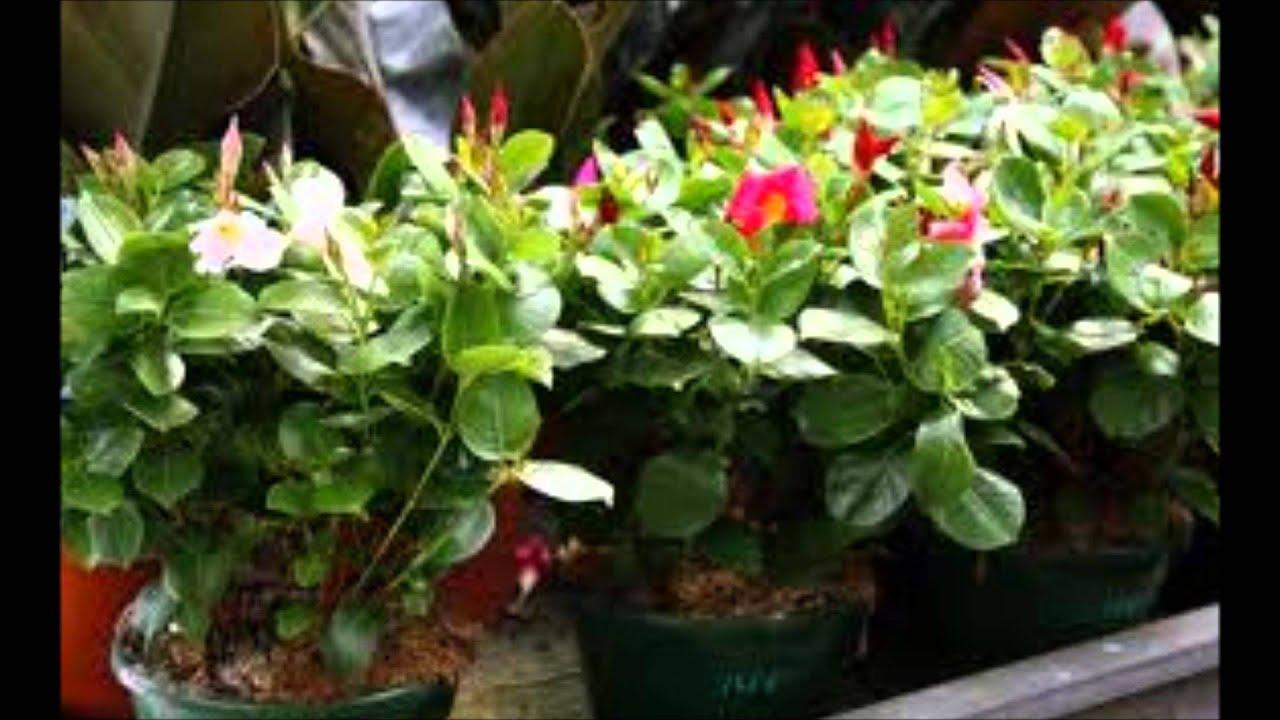 plantas de exterior resistentes