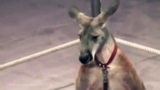 60 секунд жесточайшей дрессировки в цирке. PETA+ВИТА
