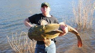 Monster Flathead Catfish 8lb, 21lb, and a 60lb!!
