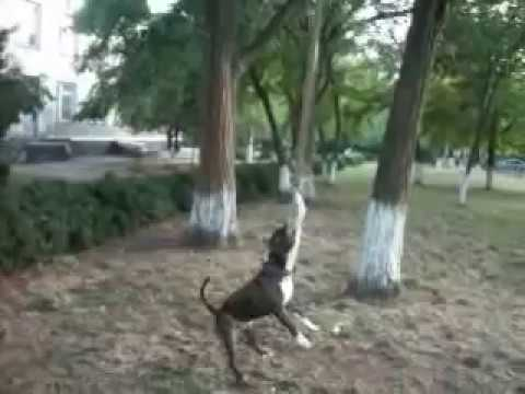 Злая собака загрызла щенка - YouTube