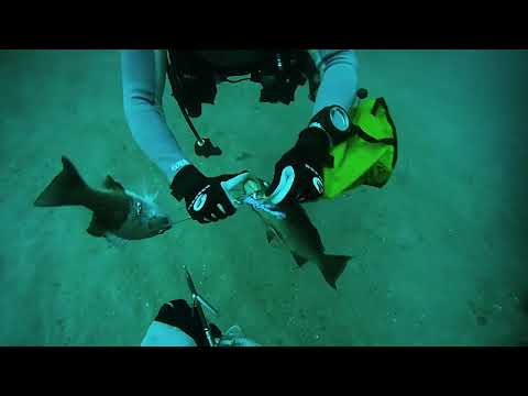 Diving a Tank in Pensacola, FL- 2013-10-12