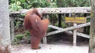 Kibell Family Orangutan Adventure Day 2