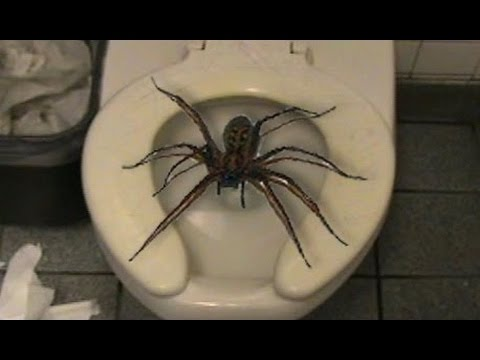 Make A Tarantula Room