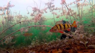 Зимняя рыбалка с подводной камерой. Первый последний лед