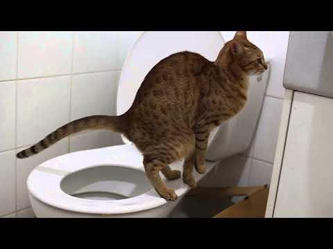 Как отучить кота метить территорию в квартире народными средствами