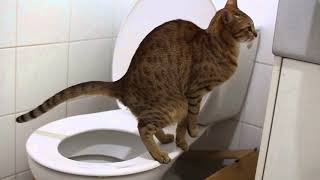 Как отучить кота метить территорию в квартире народными средствами?